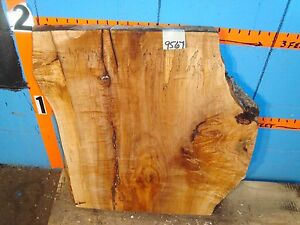 """#9567 1 13/16"""" THICK KILN DRIED spalted Maple Live Edge Slab lumber wood"""
