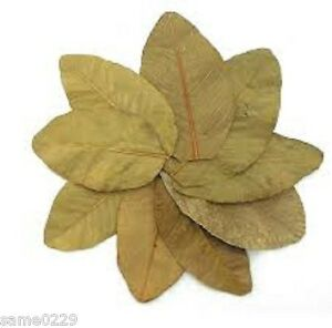 Pet Supplies Sunny Dried Guava Leaves20pcs Shrimp Food Proportion All Water Types Betta Curable Agreeable Sweetness
