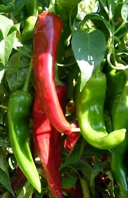 VEGETABLE  HOT CHILLI PEPPER NUMEX SANDIA  75 FINEST SEEDS