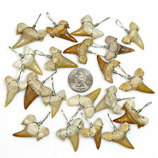 "20 Pc Lots XL 1-1/8""+ Wire Wrapped Shark Tooth Necklace Pendants Sharks Teeth"