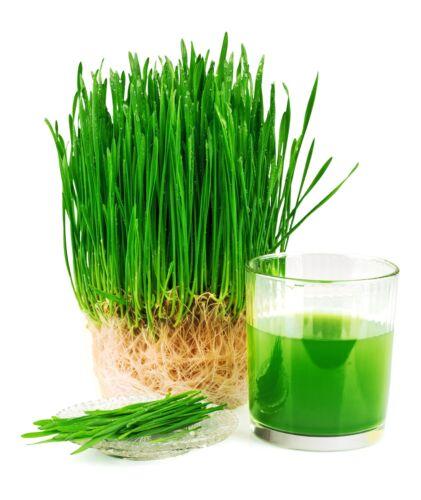 6 oz Wheatgrass
