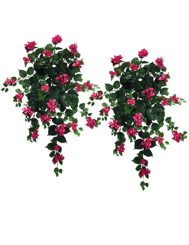 2 Bougainvillea 36  Hanging Silk Flowers Plants FU