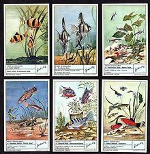 Tropical Aquarium Fish Card Set 1962 Liebig Angel Guppy Tiger Barb Neon Tetra