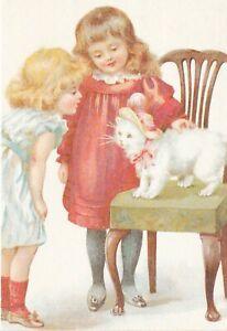 Playful-Kitten-from-Cats-Postcard-unused-VGC