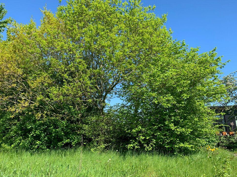 Andet, Træer