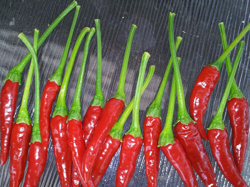 Thai Chilli Long Stem 20 Seeds Extreme Hot /& Heavy Yield