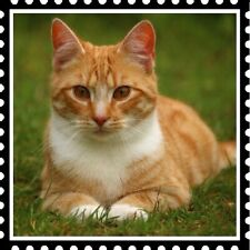 30 Custom Cat In The Grass Stamp Art Personalized Address Labels