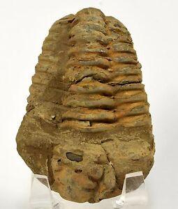 Brachiopod fossil dating methods