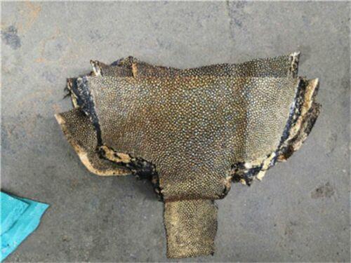 Stingray Shagreen Skin Leather Polished Stingray Fish Tail Skin Hide Pelt Scrap