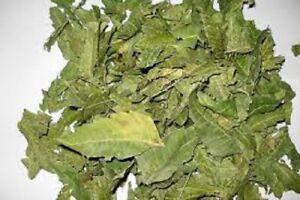 A-Organic-Neem-Dried-Leaf-100-Pure-amp-Natural-Premium-Quality-Ceylon-srilanka50G