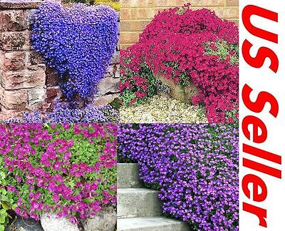 100 Creeping Thyme Seeds G25 G46 G48 Groundcover Seeds Garden