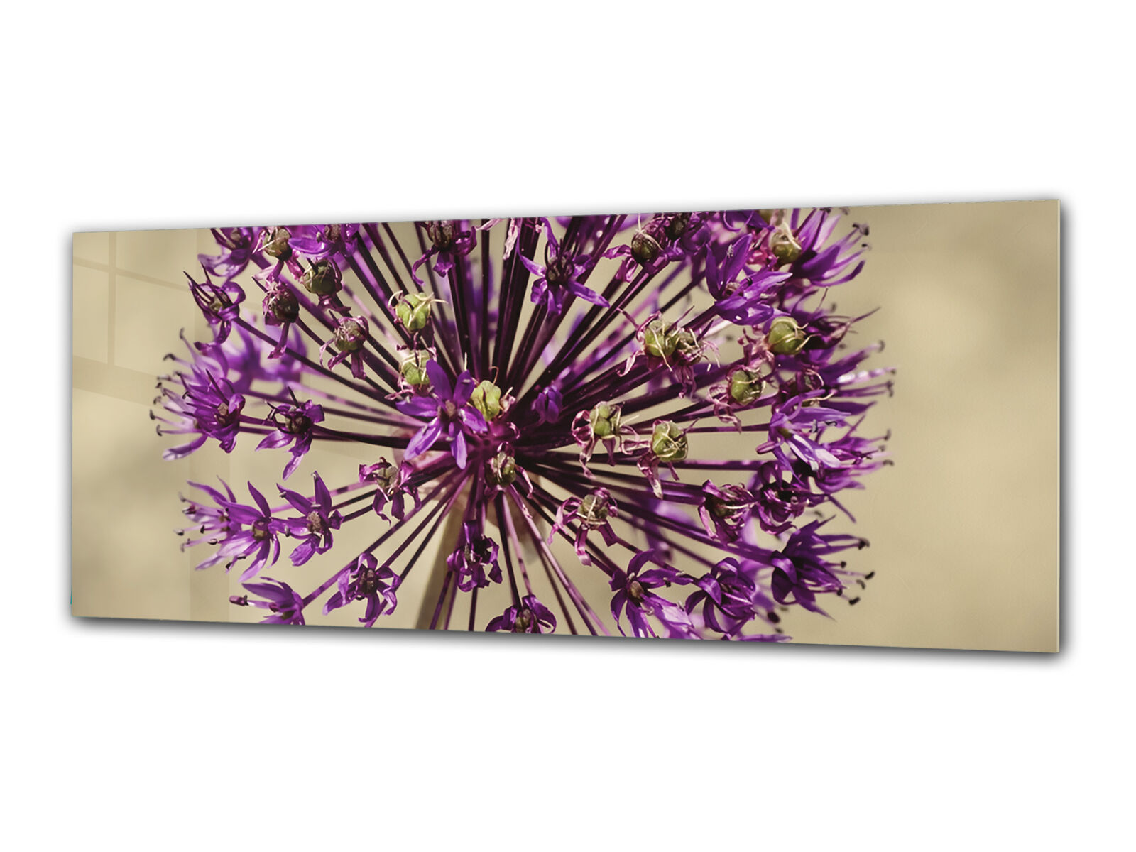 Glass Print Wall Art 80x30 cm Image on Glass Decorative Wall Picture 92244227