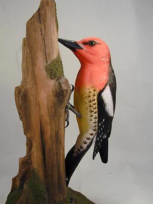 Red-breasted Sapsucker Orig Carving--Hummingbird Studio