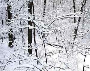 3d Forêt Neige 61 Photo Papier Peint En Autocollant Murale Plafond Chambre Art CéLèBre Pour Des MatéRiaux SéLectionnéS, Des Conceptions Originales, Des Couleurs DéLicieuses Et Une Finition RaffinéE