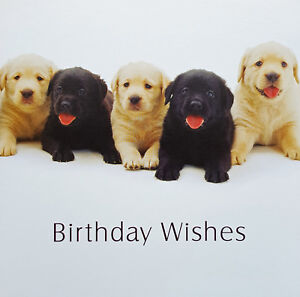 Image Is Loading Labrador Dogs Birthday Card Wishes Black Yellow