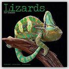 Lizards Calendar 2017 by Avonside Publishing Ltd.