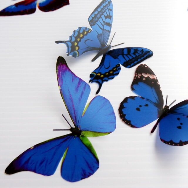12 Pack Butterflies - Dark Blue - 5 to 6 cm - Topper, Weddings, Crafts, Cards,