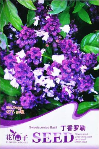 Original Package 30 Sweet Scented Basil Seeds Ocimum Gratissimum D039