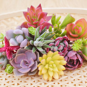 100-Rare-Mixed-Succulents-Seed-Plant-Easy-To-Grow-Potted-Flower-Seed-Bonsai-Seed