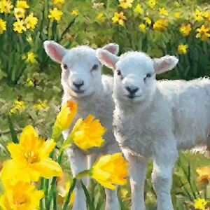 Spring Lambs Baby Sheep In A Field Stock Image - Image of ...  |Baby Lambs In Spring