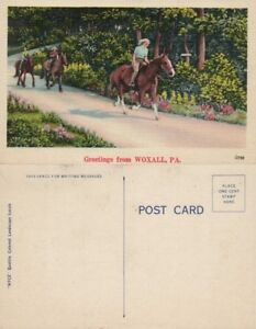 GREETINGS-FROM-WOXALL-PA-VINTAGE-POSTCARD-w-HORSES