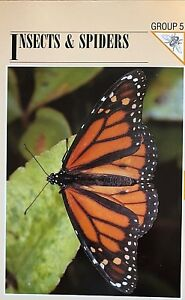 Wildlife-Fact-File-Insects-amp-Spiders-Wild-Animals-Nature-Collectors-From-1-to-66