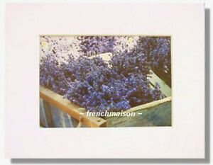 French-Provence-LAVENDER-Field-Harvest-Matted-Photo-Photography-Art-New