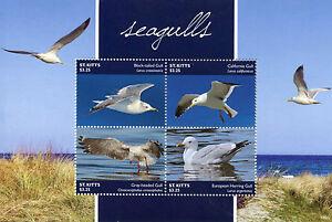 Capable St Kitts 2015 Neuf Sans Charnière Mouettes 4v M/s I Oiseaux California Herring Gull Timbres Surface LustréE