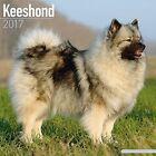 Keeshond Calendar 2017 by Avonside Publishing Ltd. (Paperback, 2016)