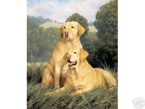 Nigel-Hemming-YELLOW-LABRADORS-Gun-Dogs-Labs-Retrievers