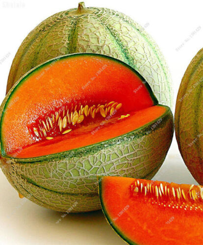 Japan Fruit Red Cantaloupe Seeds Original Green Flesh Vegetable Seeds 20 Pcs NEW