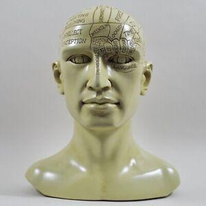 Phrenology-Head-Unique-Ornament-Traditional-Medical-Accessory-20-cm-High-01720