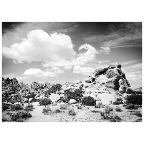 "CA Cumulus 5/""X7/"" Postcard Joshua Tree National Park"