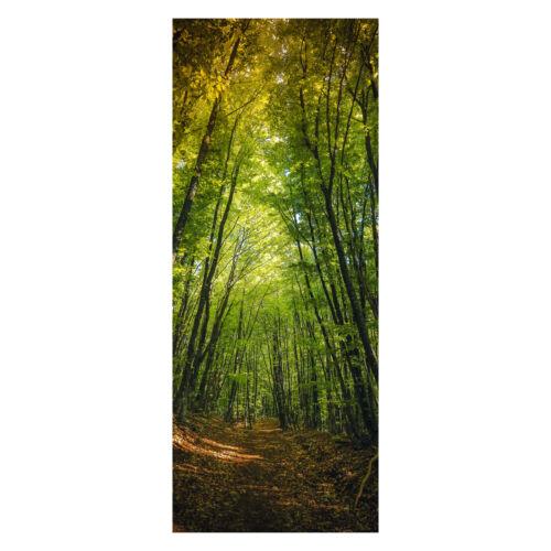 la fresque m0923 türbild Türtapete sombre chemin dans les bois Papier peint porte-Autocollants