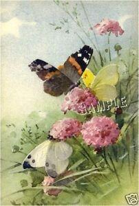 VINTAGE BUTTERFLY WILD FLOWERS *CANVAS* ART PRINT