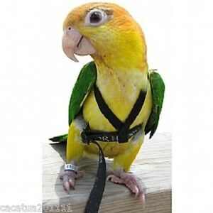 THE-AVIATOR-PARROT-HARNESS-amp-LEASH-EXTRA-SMALL-GREEN