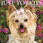 Just Yorkies 2017 Wall Calendar by Willow Creek Press.