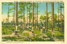 Greenville NC Turpentine Industry in the South, Collecting Gum from Pine Trees