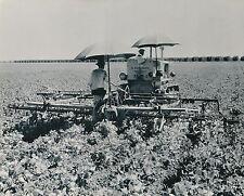 VERNALIS c. 1950 - Tracteur Caterpillar à Chenille  Californie - USA 98