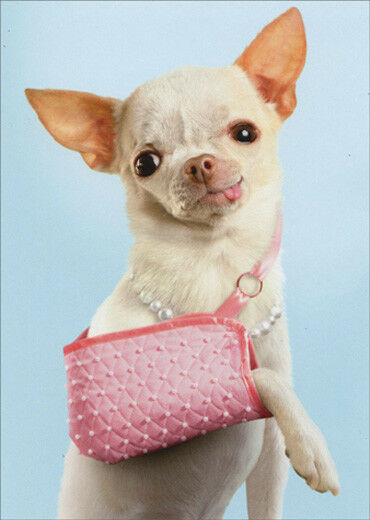 Avanti Chihuahua In Sling Funny Get Well Card