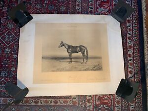 Rare Race Horse Victorian Thoroughbred Americana Trotters Schreiber Photography6