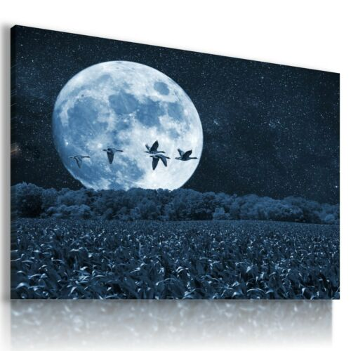 MOON BIRDS FIELDS Wild And Domestic Animals CANVAS WALL ART PICTURE AB17 MATAGA