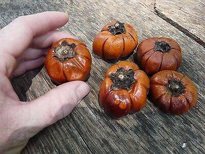 "5 Miniature dried ""pumpkin"" ornaments for natural decorative fall displays decor"
