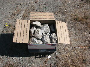 30 lbs of California Soapstone rough cut carve lapidary old stock free ship USA
