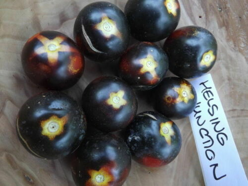 Helsing Junction Tomato BLUE and FINE! 5 seeds