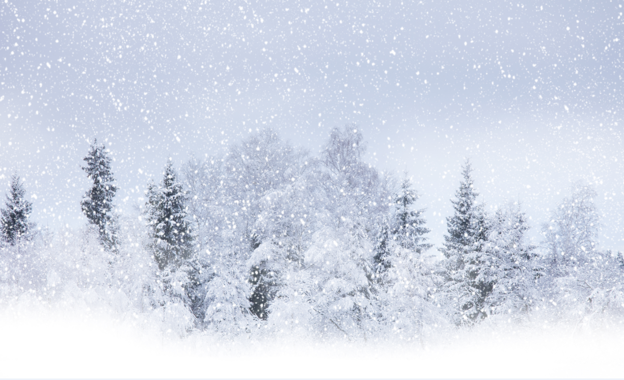 3D Verschneiter Wald 84 Tapete Wandgemälde Tapete Tapeten Bild Bild Bild Familie DE Summer   Sehen Sie die Welt aus der Perspektive des Kindes  cce6b0