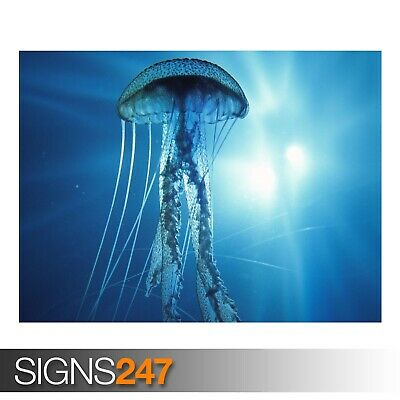 ELECTRIC JELLYFISH Photo Poster Print Art A0 A1 A2 A3 A4 3719 Animal Poster