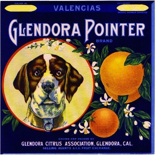 Glendora German Pointer Dog #3 Orange Citrus Fruit Crate Label Art Print