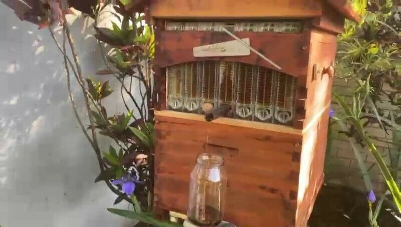 OutFlow beehive . Harvest honey directly from your own Bee hive