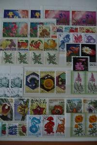 Motive-Blumen-Pflanzen-postfr-gest-kl-Sammlung-B06